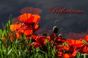 Reflections Poppies 16x24.jpg